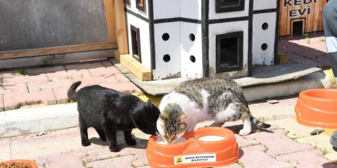 Konya'da sokak hayvanları aç kalmıyor