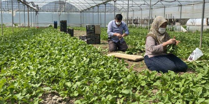 Korona sürecinde Sarıcakaya'da sebze ihracatı devam ediyor