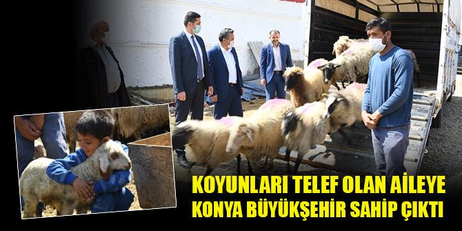 Koyunları telef olan aileye Konya Büyükşehir sahip çıktı