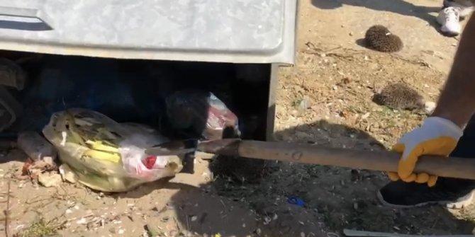 Kirpi ve 2 yavrusunu poşete koyup çöpe attılar