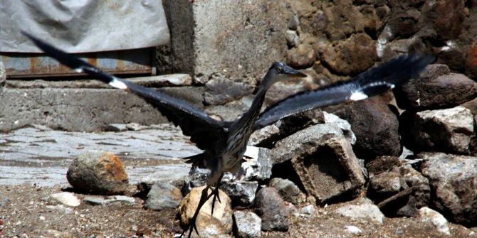 Bir evin bahçesinde bulunan gri balıkçıl kuşu yavrusu yetkililere teslim edildi
