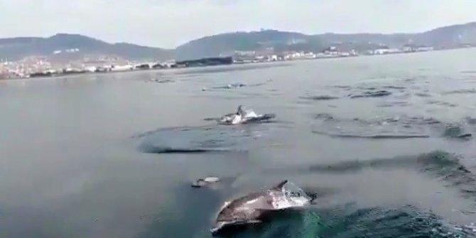İzmir Körfezi'nde yunus sürüsü tekneyle yarıştı