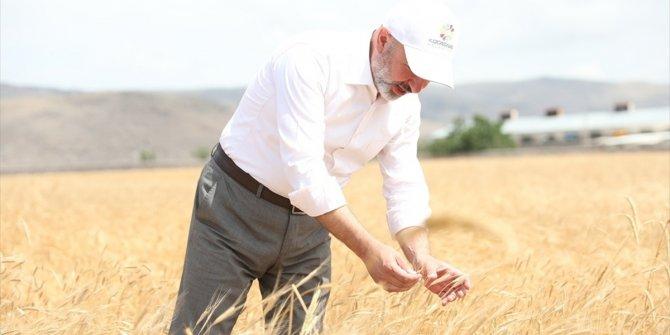 Kocasinan'da yöresel ürünlerin ekimi başladı