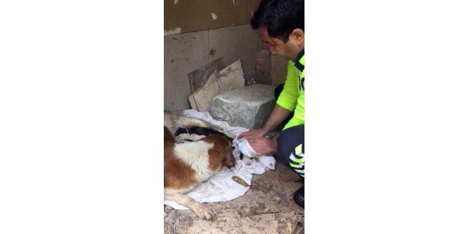 İzmir polisi köpekleri yağmurdan kurtardı, elleriyle kuruladı