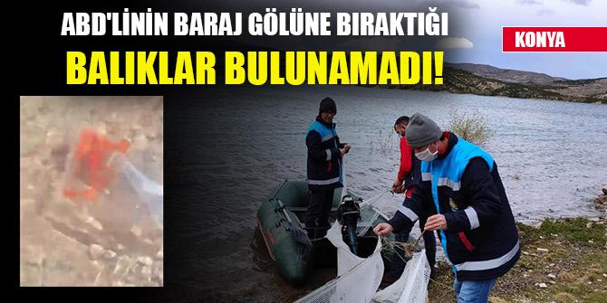 Konya'da ABD'linin baraj gölüne bıraktığı balıklar bulunamadı!