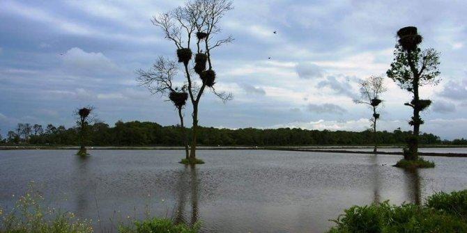 Kızılırmak Deltası Kuş Cenneti 'kesin korunacak hassas alan' ilan edildi