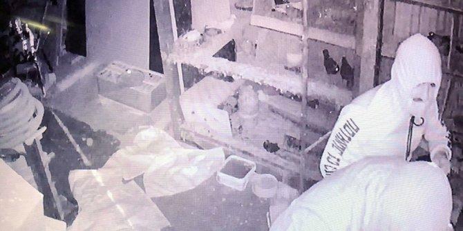 Manisa'da güvercin hırsızları kameraya yakalandı