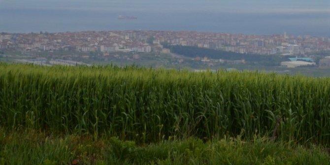 Tekirdağ'da bol yağış çiftçilerin umutlarını yeşertti