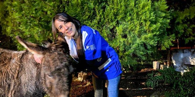 Ankara'da yavrusuna köpeklerin saldırtıldığı eşek Bursa'da tedavi ediliyor