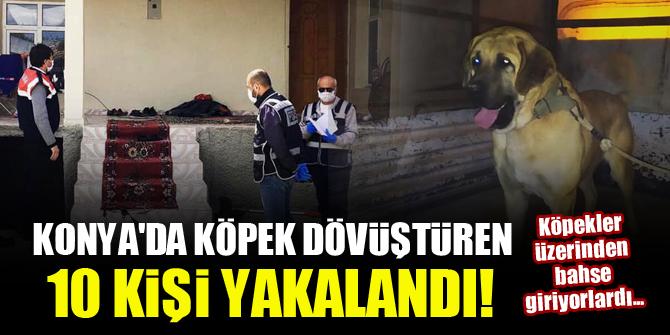 Konya'da köpek dövüştüren 10 kişi yakalandı! Köpekler üzerinden bahse giriyorlardı
