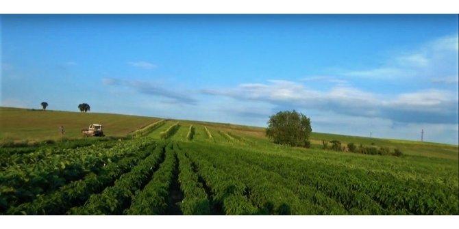 Edirne'de 395 bin 490 dekar tarım arazisi sulanmaya başlandı