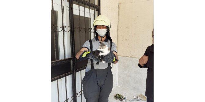 Mahsur kalan yavru kedileri itfaiye kurtardı