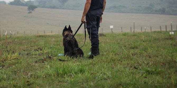 Köpekler, Kovid-19'u koklayarak teşhis etmeleri için eğitilecek