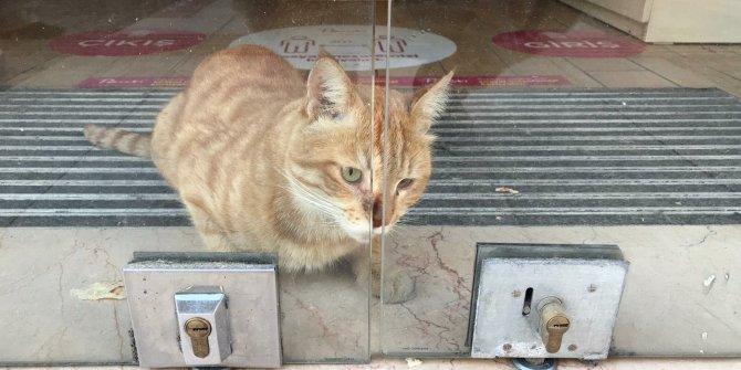 2 gün boyunca mağazada aç ve susuz kalan kedi kurtarıldı