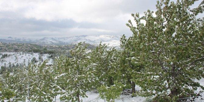 Konya'da kar yağdı, kiraz ağaçları zarar gördü