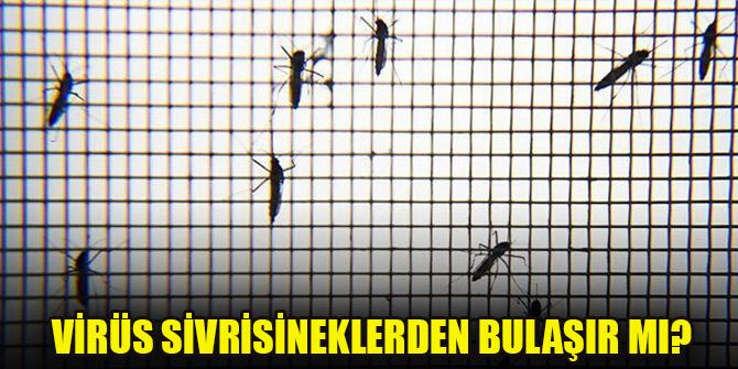 Koronavirüs sivrisineklerden bulaşır mı?