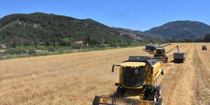 10 bin dekar arazide Türkiye'nin ilk buğday hasadına başlandı
