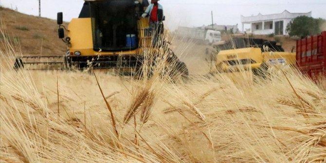 Güneydoğu'da tahıl hasadı verimli başladı
