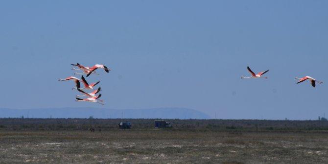 Flamingoların Düden Gölü'ne erken gelmesi doğaseverleri endişelendirdi