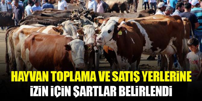 Hayvan toplama ve satış yerlerine çalışma izni verilmesi için şartlar belirlendi