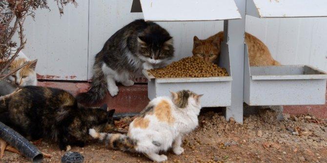 Meram'da sokak hayvanlarına 17 ton mama bırakıldı