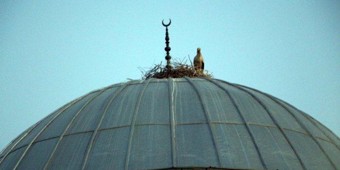Cami kubbesi 16 yıldır leyleklerin yuvası oldu
