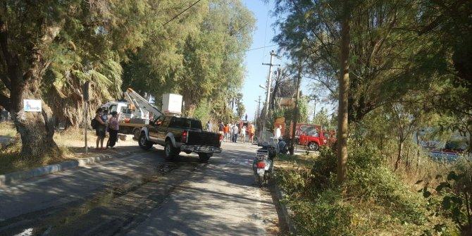 Trafodan çıkan yangın 60 palmiye ağacı ile bir otelin lojman ve ofisine zarar verdi