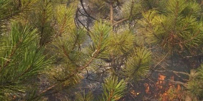Devrilen elektrik direği ormanı yaktı