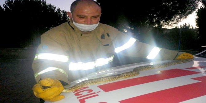 Edremit'te aracın içindeki yılanı itfaiye ekipleri çıkardı