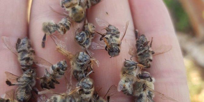 Mersin'de arı kovanlarına sinek ilaçlı saldırı