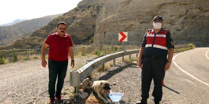 Sıcaktan etkilenen hayvanlara su ve yiyecek götürdüler