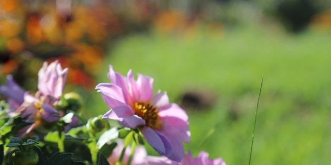 Bingöl'de üretilen 150 bin bitki toprakla buluştu