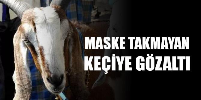 Hindistan'da ilginç olay: Polis maske takmayan keçiyi gözaltına aldı