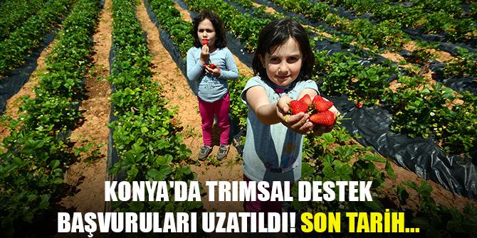 Konya'da trımsal destek başvuruları uzatıldı! Son tarih...