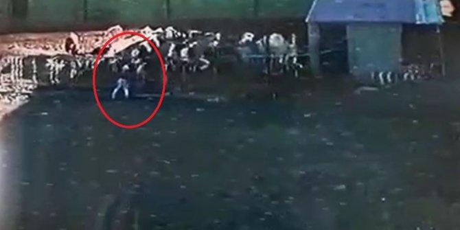 Boğa saldırdığı sahibini öldürdü; o anlar kameraya yansıdı