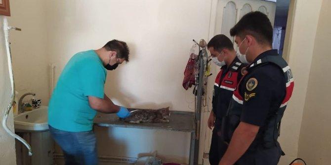 Jandarmanın dikkati yaralı kediyi yaşama döndürdü