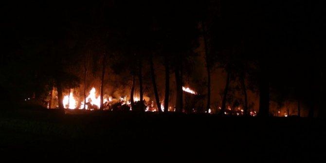 Çöp dökülen alanda başlayan yangın ağaçlara sıçradı