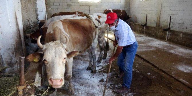 Hibe edilen 4 inekle işsizlikten kurtulan eski hükümlü: Yanlış yola sapmayın