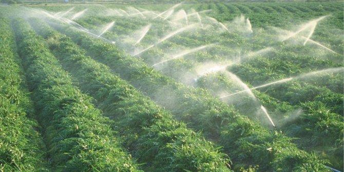 Programlı sulama ile verim yüzde 26 arttı