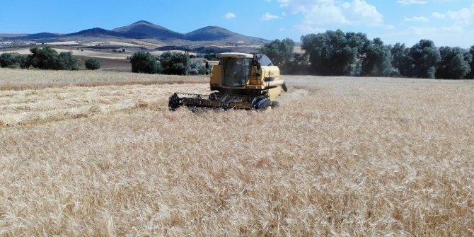 Sertifikalı tohum verimi yüzde 30 artırıyor
