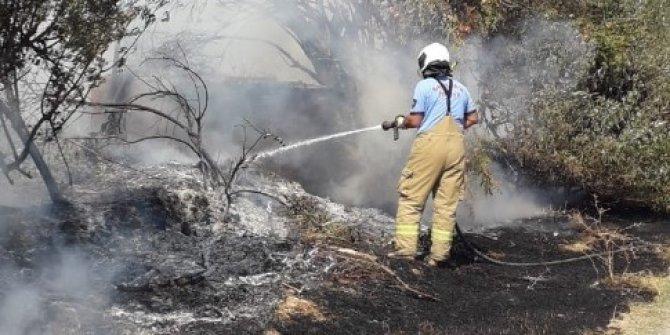 Ot yangınında ağaçlar zarar gördü