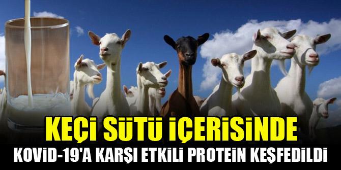 Keçi sütü içerisinde Kovid-19'a karşı etkili protein keşfedildi