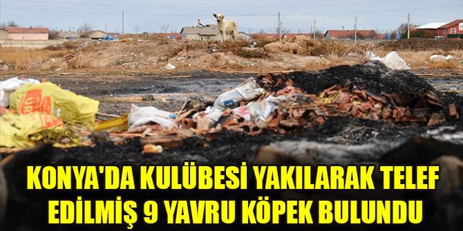 Konya'da kulübesi yakılarak telef edilmiş 9 yavru köpek bulundu