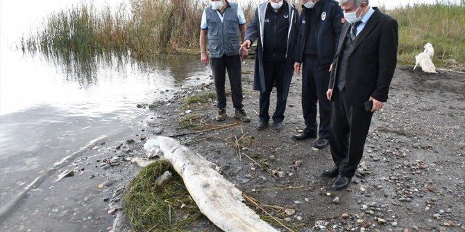 Ölü yayın balığı kıyıya vurdu