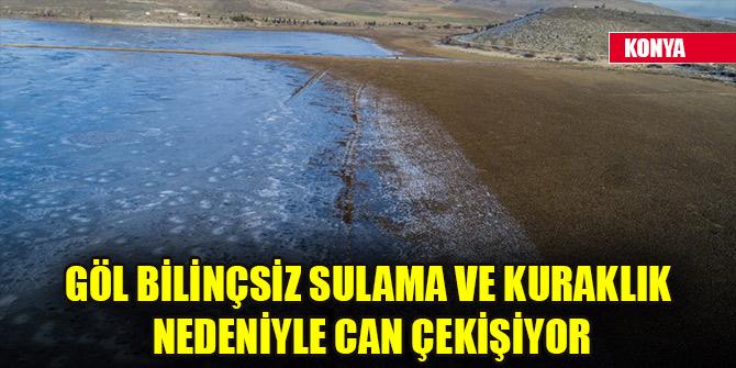 Konya'daki göl bilinçsiz sulama ve kuraklık nedeniyle can çekişiyor