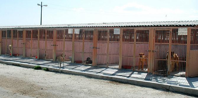 Konya Büyükşehir Belediyesi sahipsiz hayvanları unutmuyor