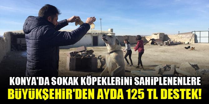 Konya'da sokak köpeklerini sahiplenenlere Büyükşehir'den ayda 125 TL destek!