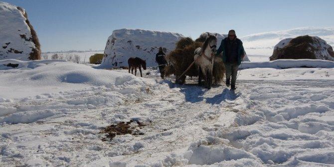 Besicilerin kış mevsiminde en büyük destekçileri atlı kızaklar
