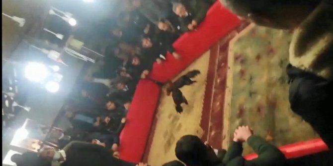 Şanlıurfa'da horoz dövüşü baskınında 71 kişiye ceza kesildi