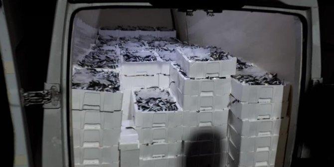 3 ton balığa el konuldu